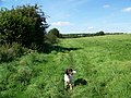Footpath near Tisbury - geograph.org.uk - 1494050.jpg