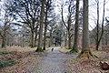 Footpath through Holme Wood, Loweswater - geograph.org.uk - 1179763.jpg