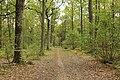 Forêt Départementale de Méridon à Chevreuse le 29 septembre 2017 - 32.jpg
