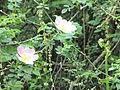 Forêt de Buzet 2014-05-08T13-56-02.jpg