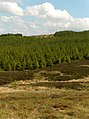 Forest, Touch Muir - geograph.org.uk - 184878.jpg