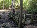 Forest Bridge (48966074598).jpg
