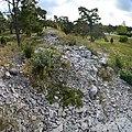 Fornborg vid Lickershamn, Stenkyrka raä 22 3.jpg