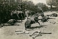Frederic Remington - How the Horses Died for Their Country at Santiago - 1982.794 - Art Institute of Chicago.jpg