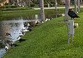 Friendly meeting at the pond - OK. On peut jaser le président est occupé - panoramio.jpg