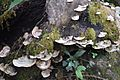 Fungus Invasion.jpg