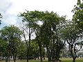 FvfMalacanangManila0087 34.JPG