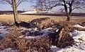 Gånggrift (RAÄ-nr Gökhem 19-1) + Holöja storhög (RAÄ-nr Gökhem 21-1) 189-28.jpg