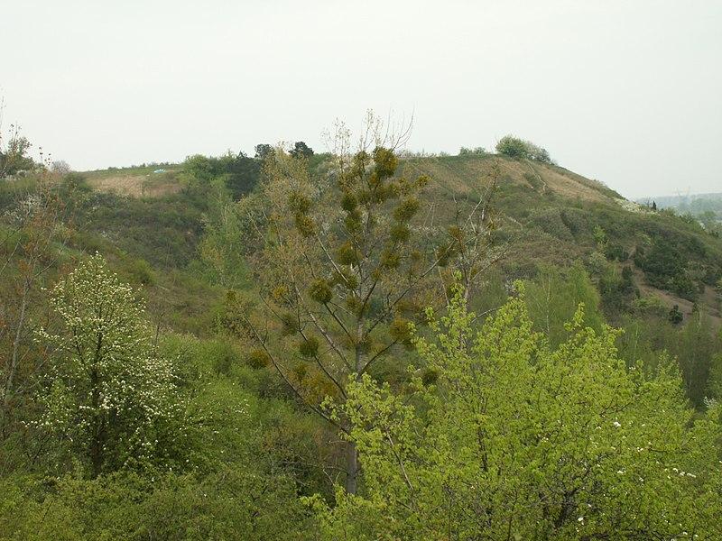 File:Góry pieprzowe - jemioła.JPG