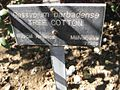 Gardenology.org-IMG 2028 hunt09oct.jpg
