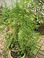 Gardenology.org-IMG 7599 qsbg11mar.jpg