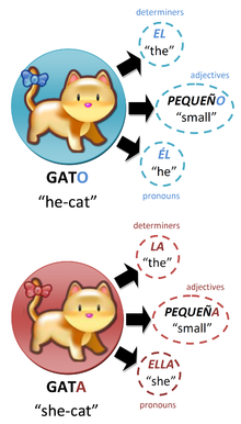 Gatos.png