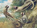 George Garrard - A Marmoset in Three Attitudes - Google Art Project-2.jpg
