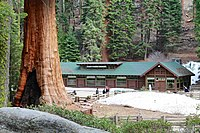 Giant Forest Museum of Giant Forest Grove.jpg