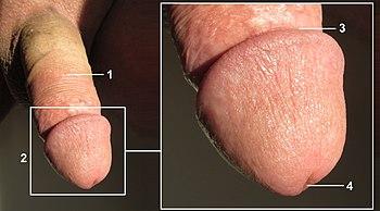Frauen pinkeln nackt