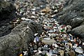 Glass Beach - 36767310643.jpg