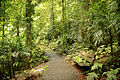 Gondwana rainforest at Dorrigo National Park (6611254443).jpg