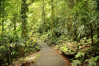 Dorrigo National Park - Image: Gondwana rainforest at Dorrigo National Park (6611254443)