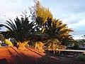 Granadilla de Abona, Santa Cruz de Tenerife, Spain - panoramio (5).jpg
