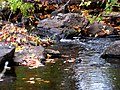 Grant's Creek (Tay River) at Allan's Mill, October, 2009 (5020608815).jpg