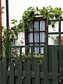 Grape vines - geograph.org.uk - 569110.jpg
