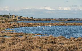 Greater Flamingos, Lido de Thau, Sète 08.jpg