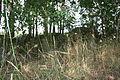 Großsteingrab Reckum 1 13.JPG