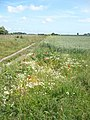 Ham Marshes near Faversham Creek - geograph.org.uk - 1353902.jpg