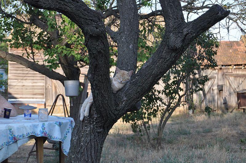 File:Hand wash basin on a tree. Zimovnikovsky district of Rostov region.jpg