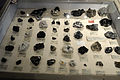 Harvard Museum of Natural History (DerHexer) 2012-07-20 23.jpg