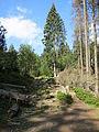 Harz Brocken Sept-2015 IMG 6332.JPG