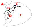 Hay Castle - schematic.png