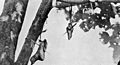 Head hunting, hand and foot hanging from branches of a tree Wellcome M0005679EB.jpg