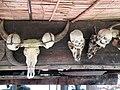 Headhunting Skulls (47958925068).jpg
