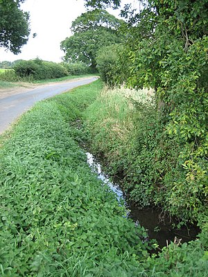 Panford Beck - The headwaters of Panford Beck