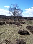 Medieval deerpark and other archaeological remains in Sutton Park