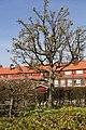 Helsingborg 2009-04-23 (3505065642).jpg