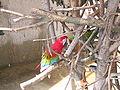 Henry Vilas Zoo IMG 2379.jpg