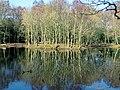 High Beach Epping Forest pond reflections, Essex, England 02.jpg