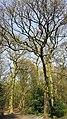 Highgate Wood 20170330 145255 (49400923906).jpg