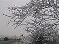 Hoar Frost near Blaenavon - geograph.org.uk - 526185.jpg