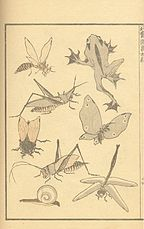 Hokusai-insects-snail-frog.jpg