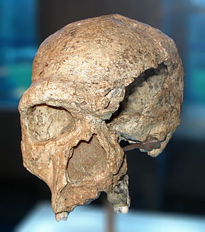 History of Germany - The Steinheim Skull is at least 250,000 years old