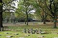 Hooglede Soldatenfriedhof R03.jpg