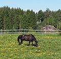 Horse in Jämsä.jpg