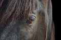 Horse portrait by Bonnie Gruenberg.JPG