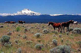 Horses in the United States - Horses on the Warm Springs Indian Reservation in north central Oregon, with Mount Jefferson in the background