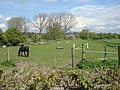 Horses next to Brundon Lane - geograph.org.uk - 785691.jpg