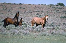 Two horses in a field. The one on the left is a dark brown with a black mane and tail. The one on the right is a light red all over.