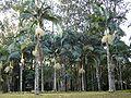 Horto Florestal.JPG